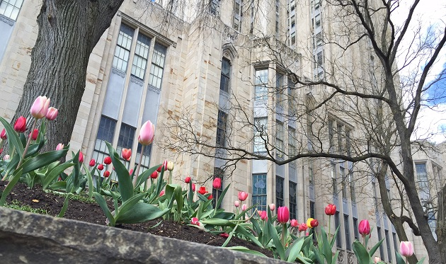 Tulips in front of the Cathedral of Learning