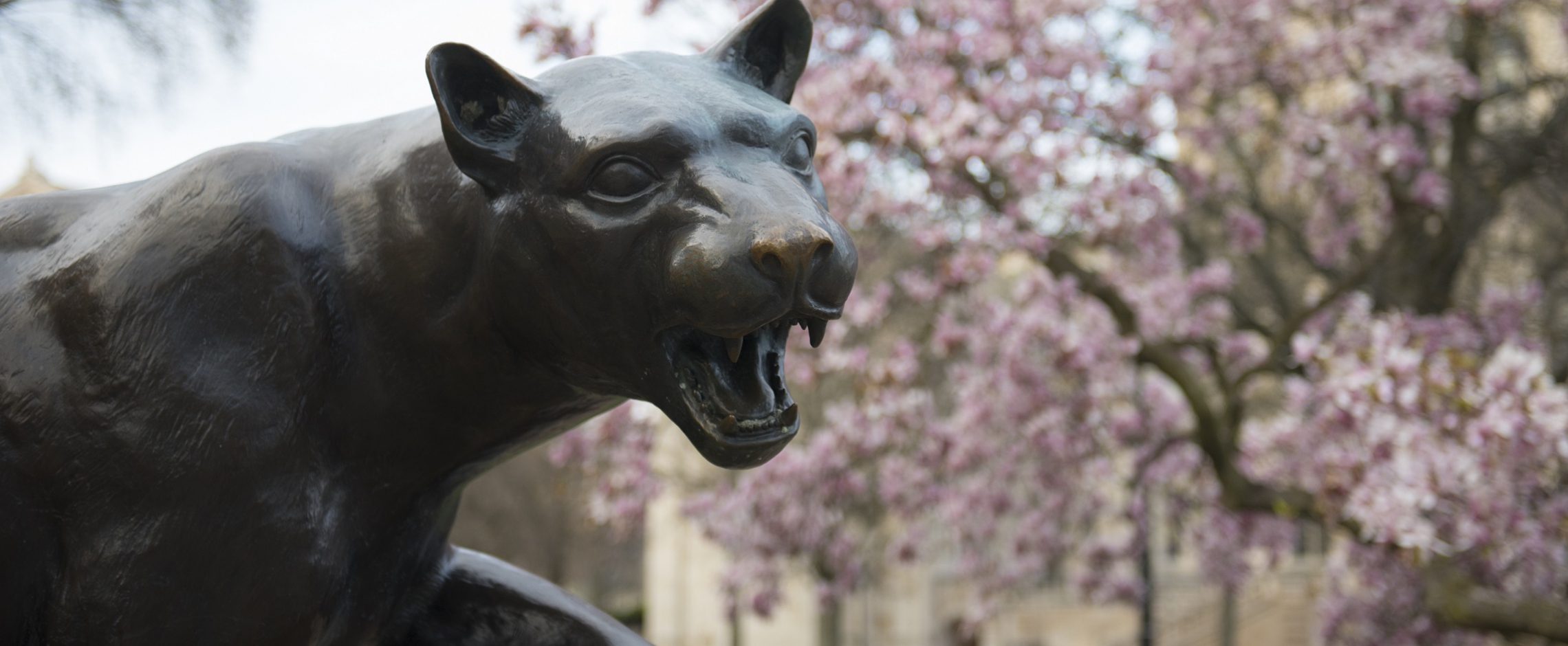 Panther with Spring Flowers