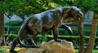 Pitt Panther on Campus