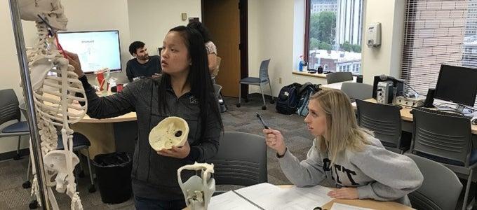 students analyzing anatomy